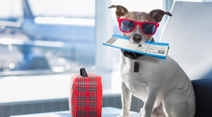 Traveling with Your Dog: What You Need to Know