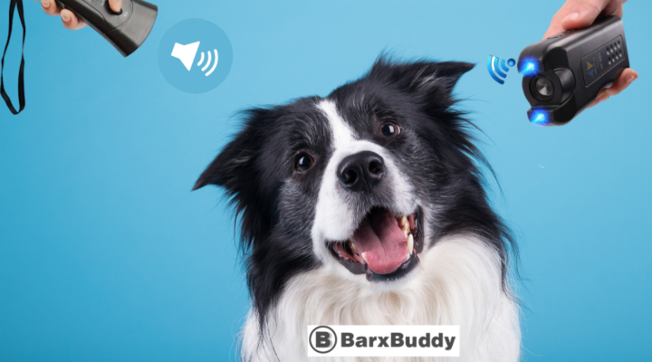 Is BarxBuddy Worth It? Everything You Need To Know Before Buying